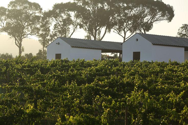 Vineyards_2.JPG