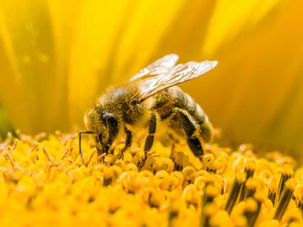 Bee's Will