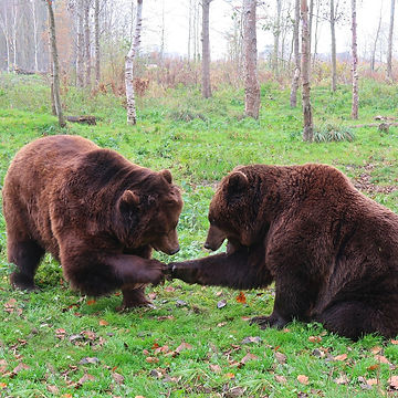 bear-3982960_1920.jpg