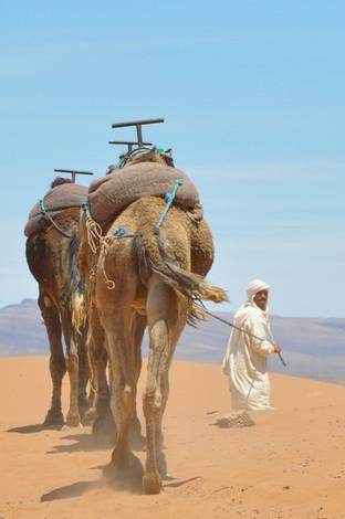 SFU Marokko