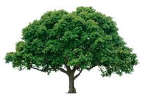 Image R Tree and shrub.png
