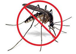 no_mosquito.jpg
