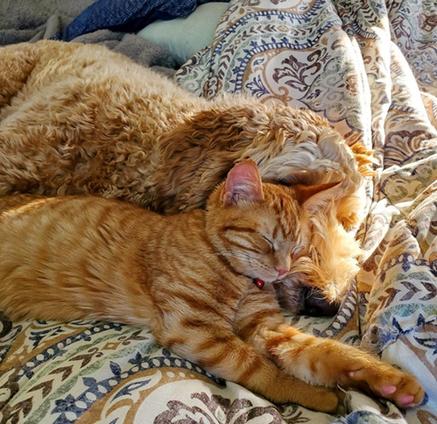 Cat Winner Best Animal Friends