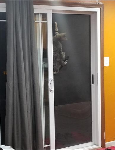 Cat Winner Caught in the Act