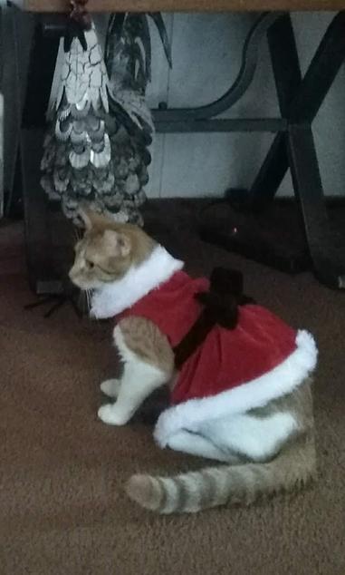 Cat Winner Best Costume