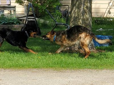 Dog Winner Best Action