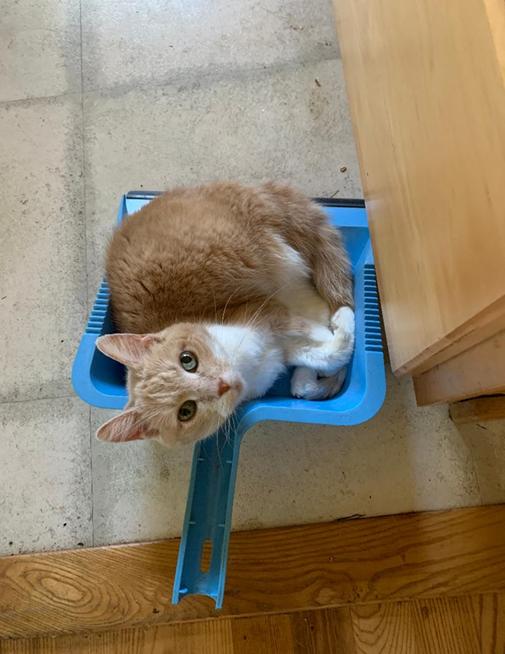 Cat Winner Working