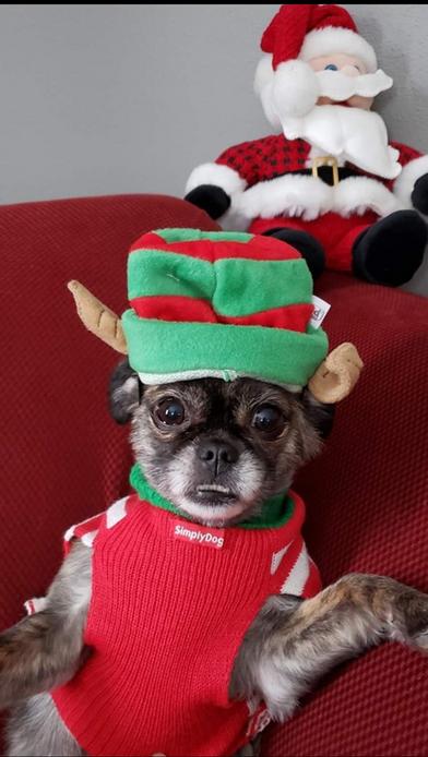 Dog Winner Best Costume