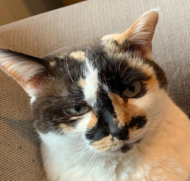Cat Winner Grumpiest