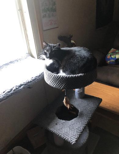 Cat Winner Silliest