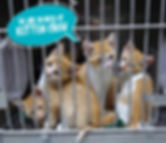 Donations help cover costs of caring for animals