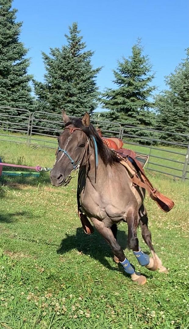 Equine Winner Best Action