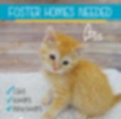 Foster Poster Idea.jpg