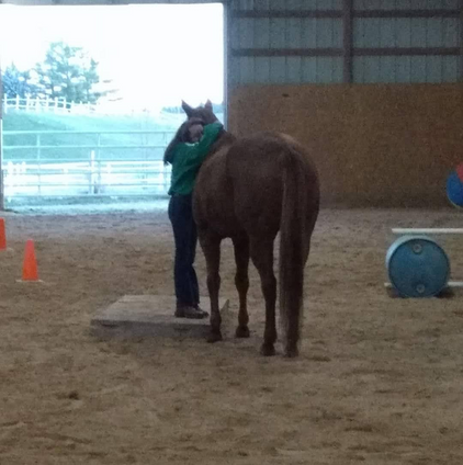 Equine Winner Best Friends