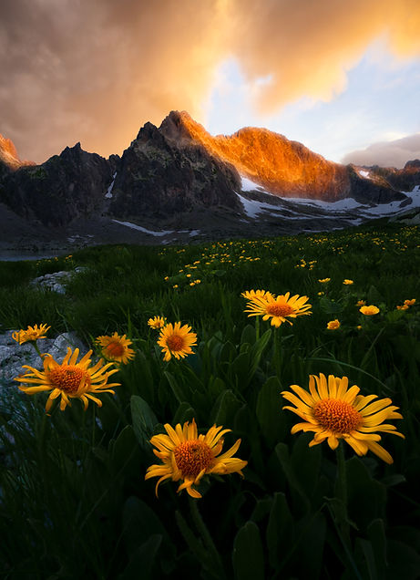 kvety-tery-web.jpg