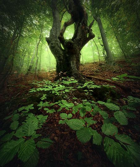 Muranska-strom-2.jpg
