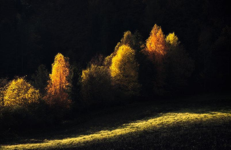 stromy-abstrakt-jesen2.jpg