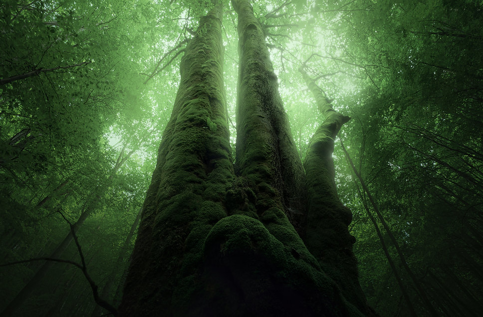 strom-muran.jpg