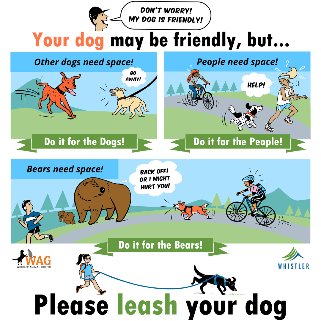 Please Leash Your Dog