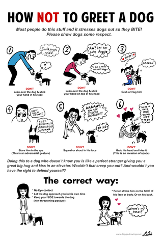 How Not To Greet A Dog