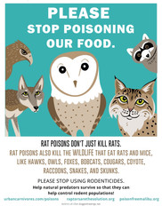 No Rodenticides