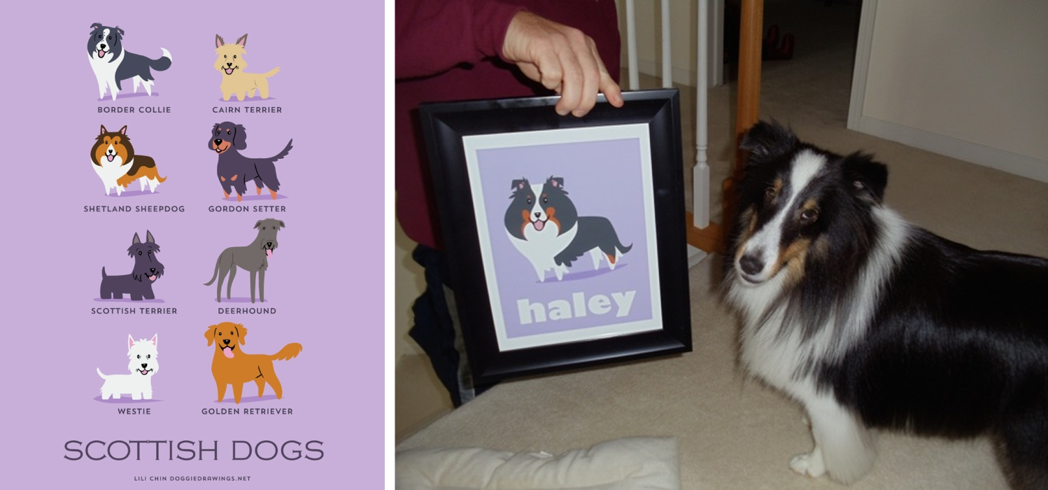 HALEY - custom Sheltie print