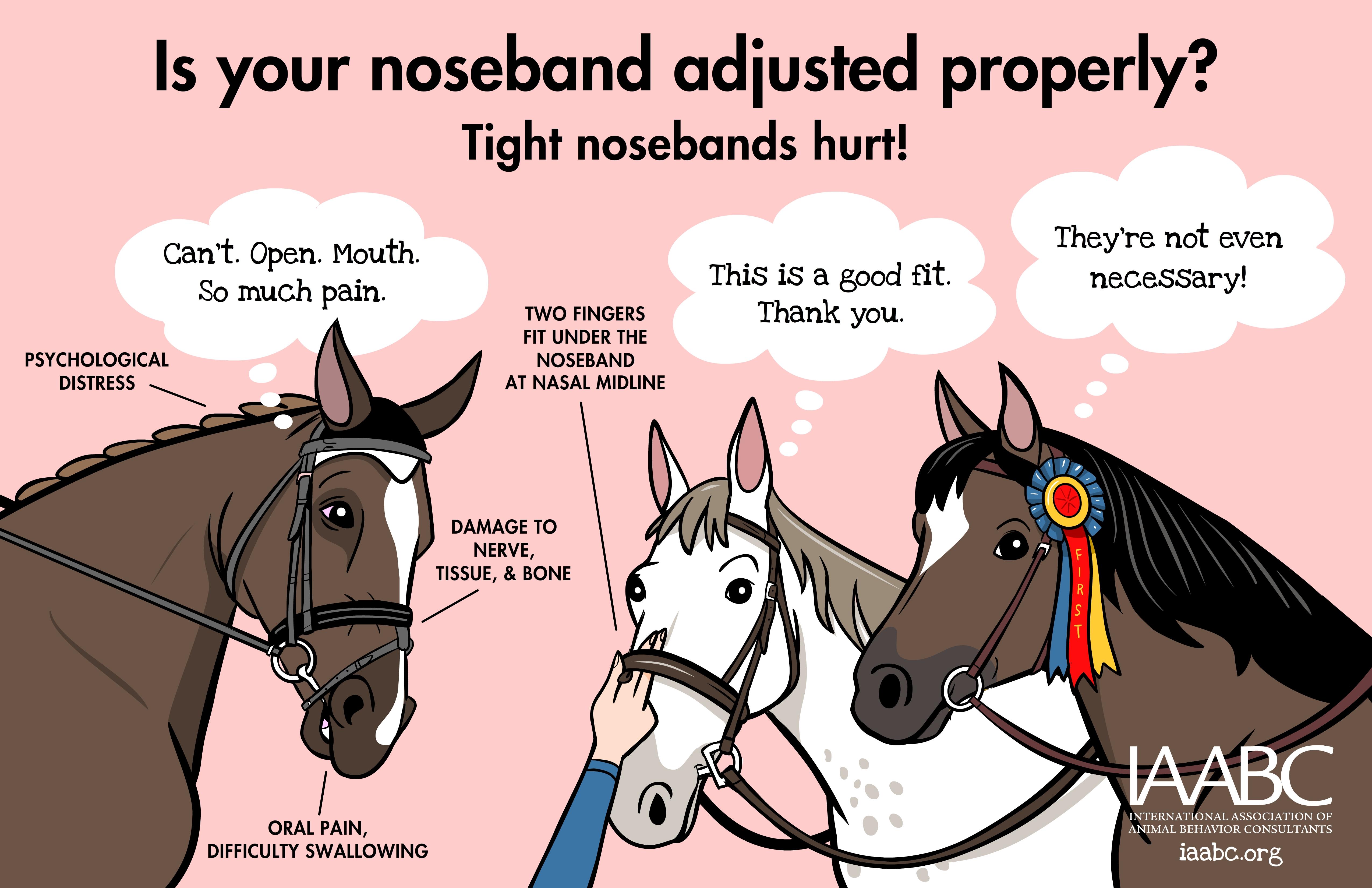 Horse Nosebands