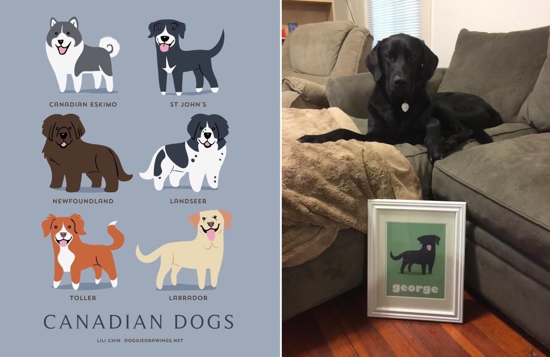 GEORGE - custom labrador print