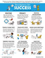 Decompress For Success - series
