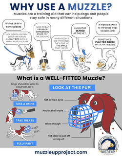 Why Use A Muzzle?