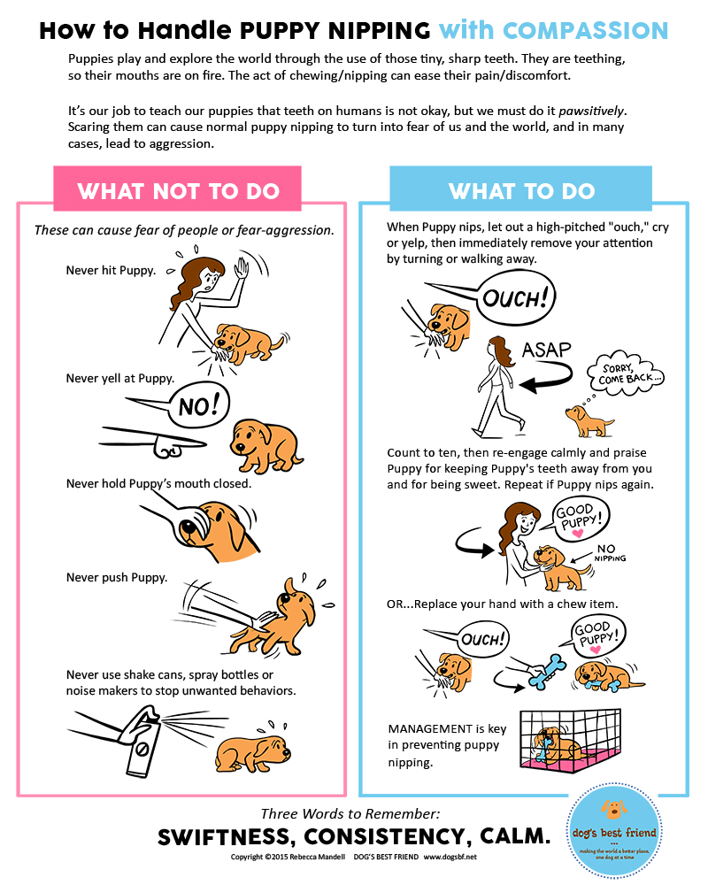 Prevent Puppy Nipping