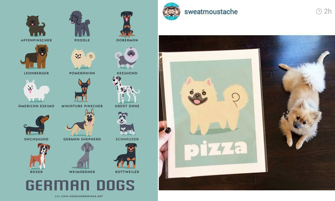 PIZZA - custom Pomeranian print