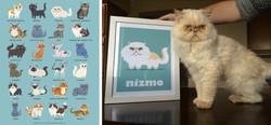 NIZMO - custom Himalayan cat print