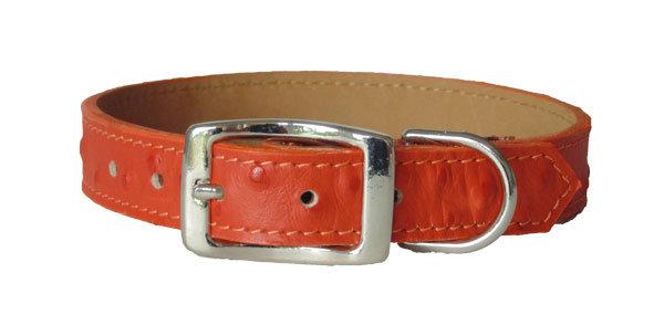 Ostrich Collar Orange