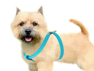 Why your (little) dog should be wearing a harness and your (big) dog should not