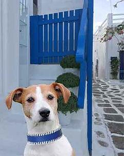 Jack-blue-Mykonos.jpg