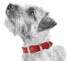 Terrier_Light_red-croc.jpg