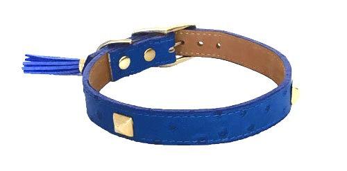 Ostrich Straight Collar Royal Blue