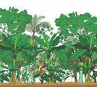 Agroforestry for degraded areas with fer