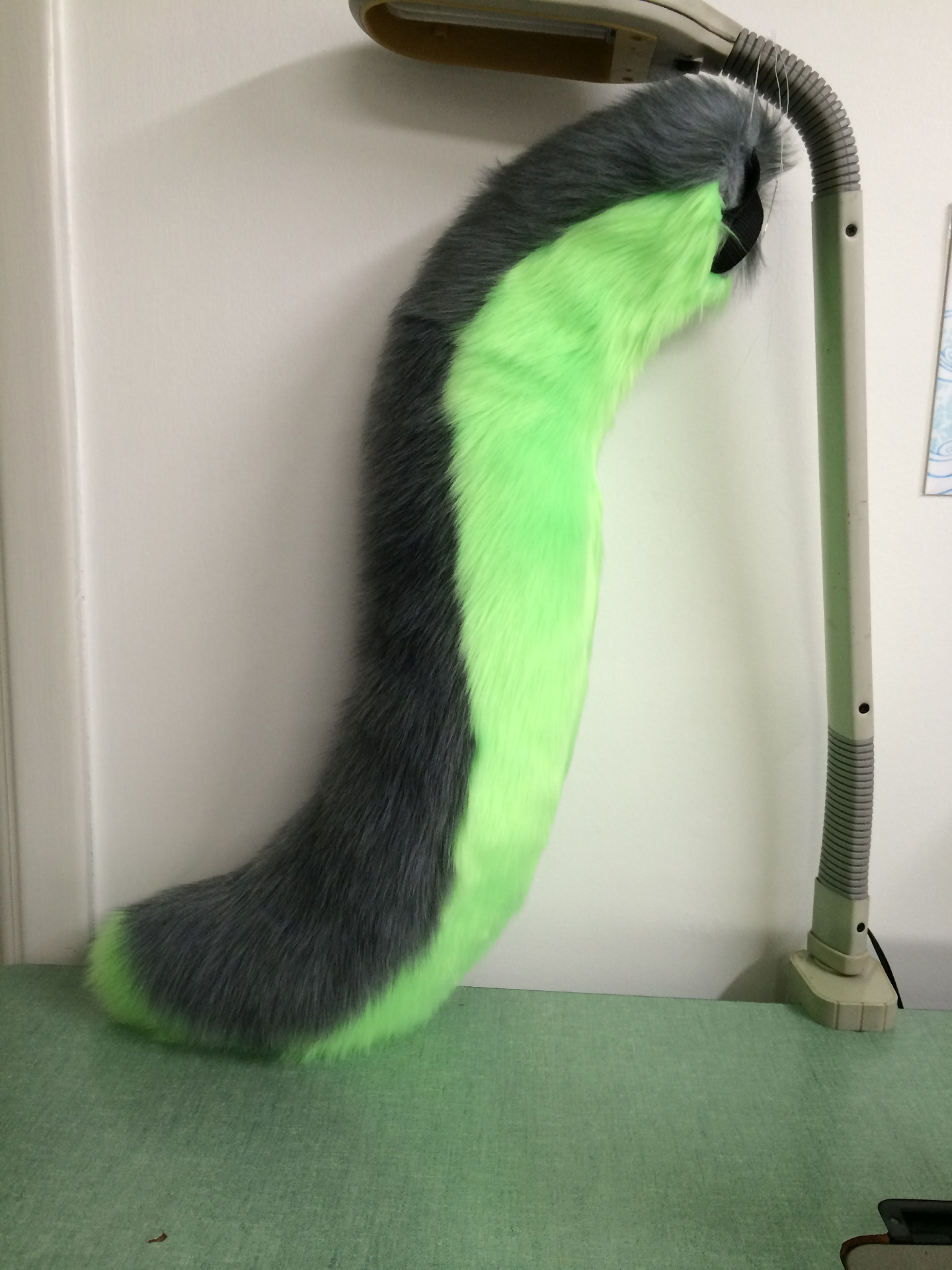 Canine Tail