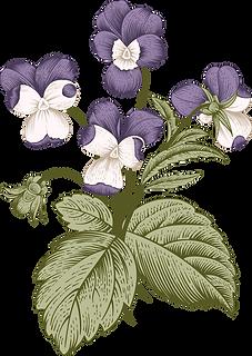 Botany