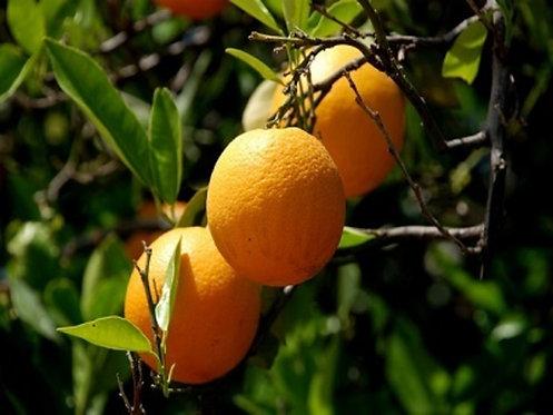 Naranja dulce Bio 10 ml