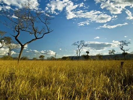 """Para reforçar a conservação ambiental, Palácio do Buriti lançou o projeto """"Conserva Cerrado"""