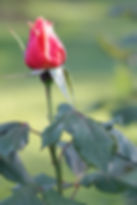 PhotoEditor-1510847251167.jpg