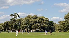 Cricket Scrimage
