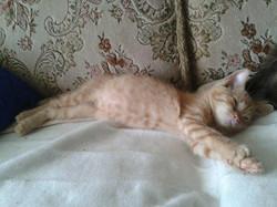 Kotě Stela
