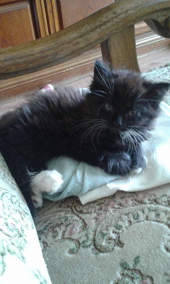 Kočička Máša