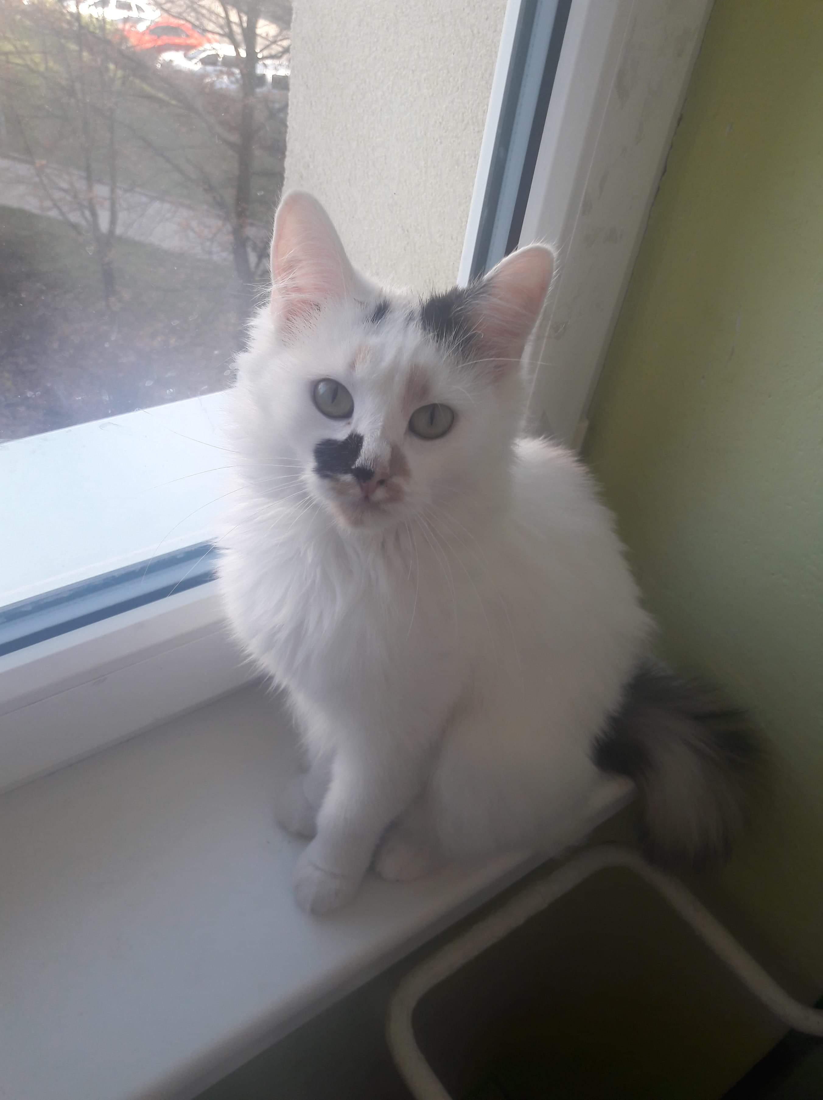 kočka Jessica