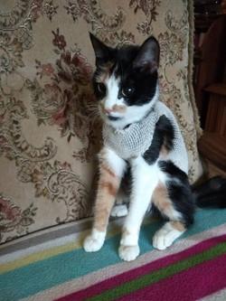 kočka Boriska
