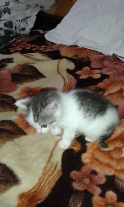 Kočička Dora